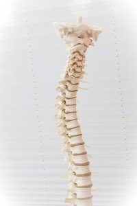 Image of spine